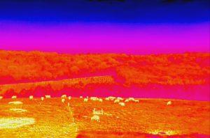 Image thermique réalisée avec un DJI Inspire 1 et une caméra DJI Zenmuse XT