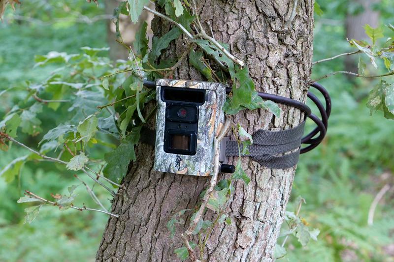 Piège photographique dans un arbre