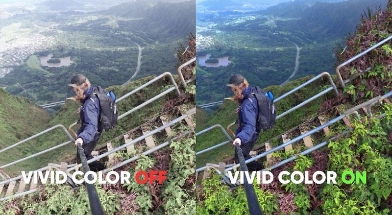 Vivid Color